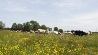 Biologisk mångfald och ett levande landskap