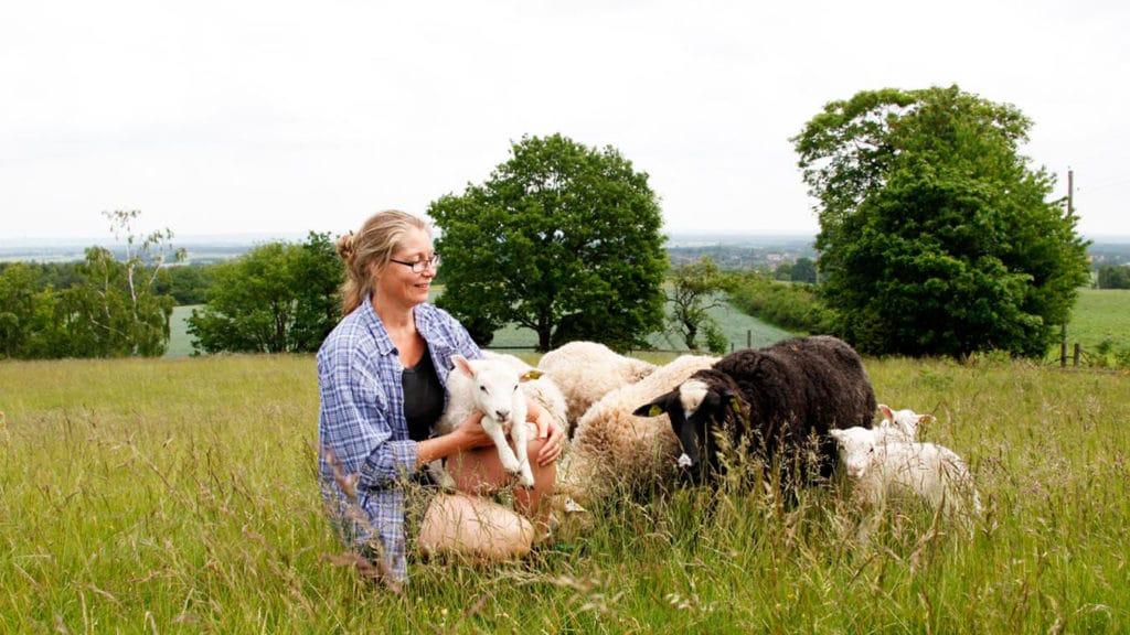 Köttmarknadsutveckling för lammkött