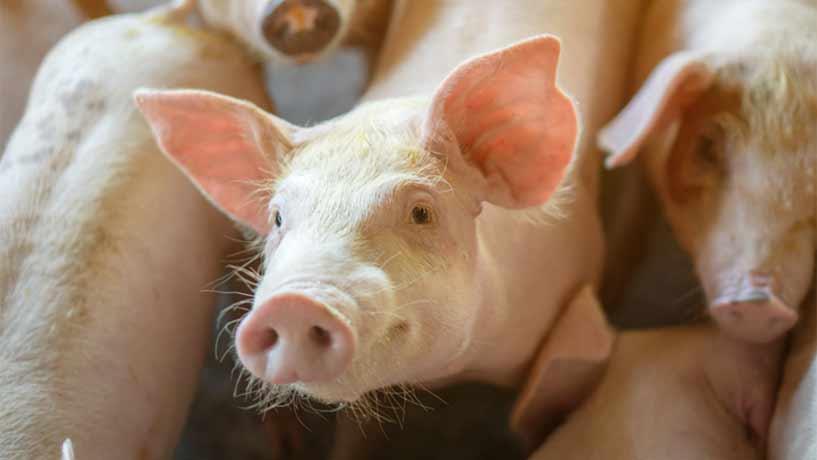 Kan kött vara hållbart?