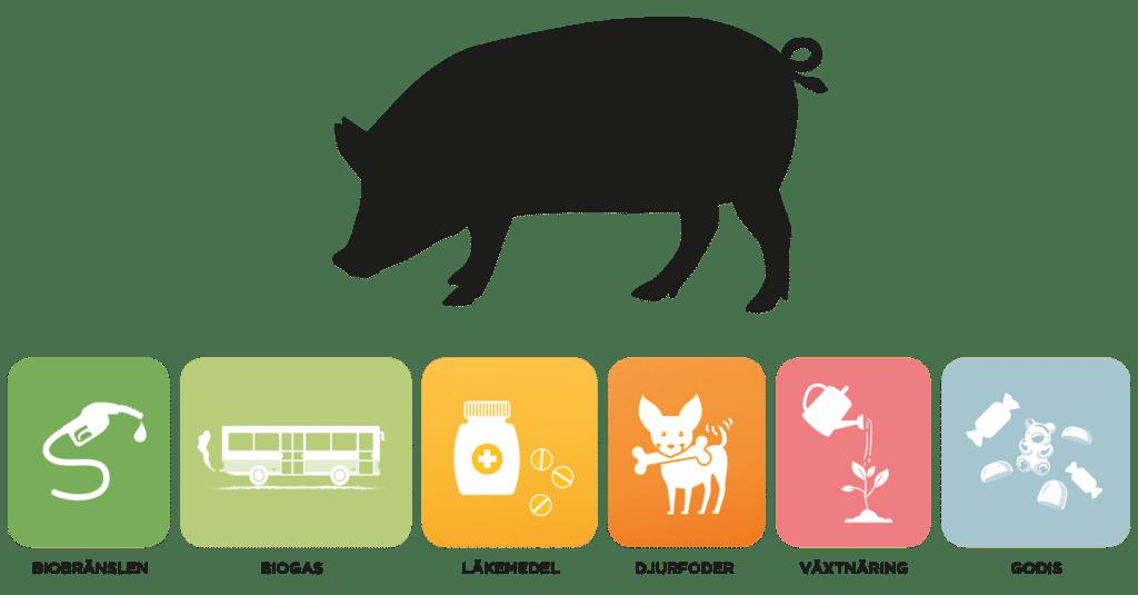Hela grisen tas tillvara