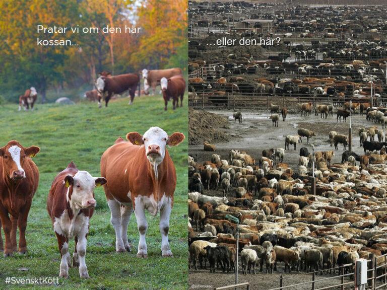 Kött som kött, spelar det någon roll var det kommer ifrån?