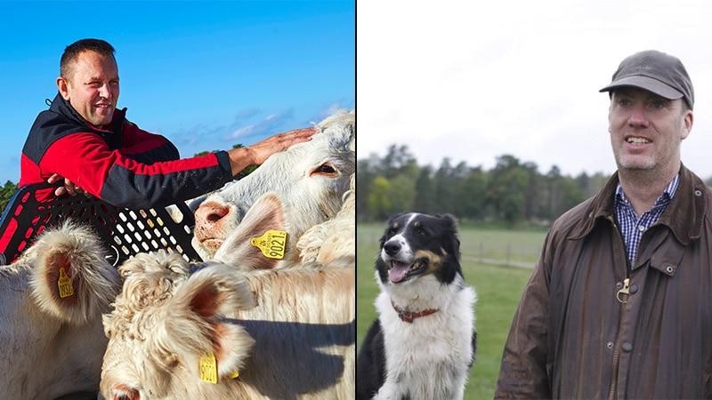 Bönder om djurplågeri på slakteri – totalt oacceptabelt