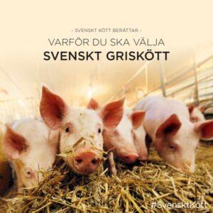 Varför du ska välja svenskt griskött broschyr