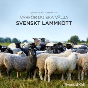 Varför du ska välja svenskt lammkött broschyr