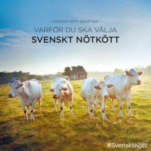 Varför du ska välja svenskt nötkött broschyr