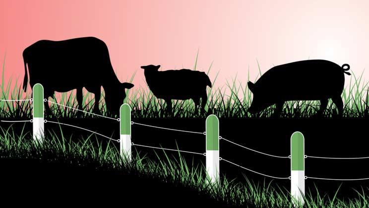 Antibiotika och djuruppfödning
