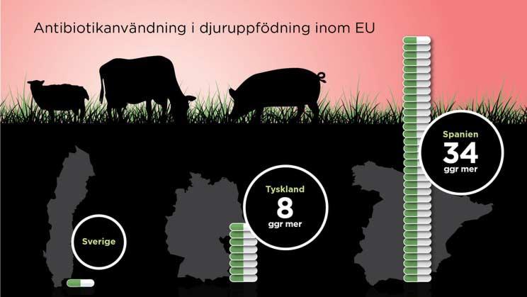 Antibiotikaanvändning i djuruppfödning