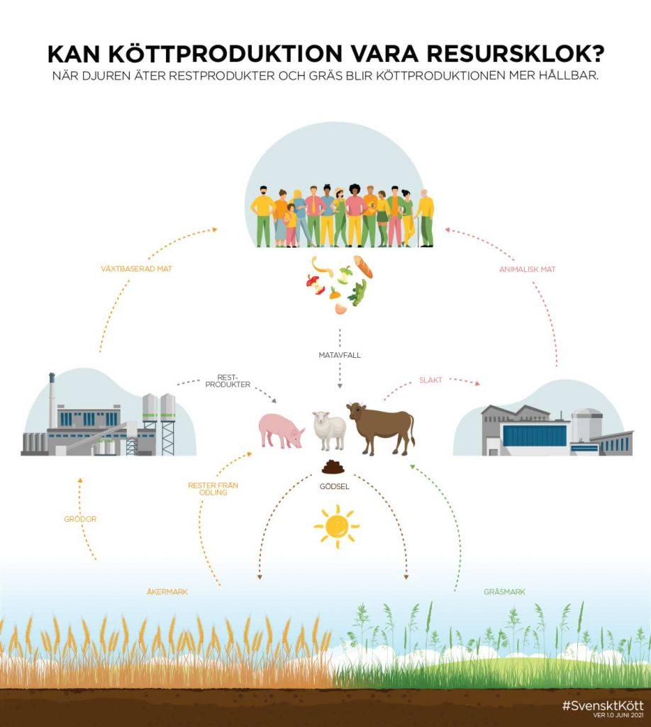 Resursklok köttproduktion