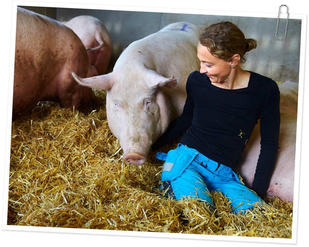 Slakt – hur djur blir till mat